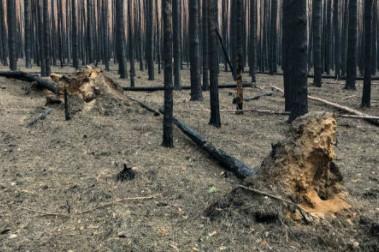 Tree Removal Albany